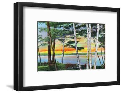 Sebago Lake, Maine - Scenic View Along the Lake with White Birches, c.1949-Lantern Press-Framed Art Print