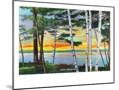 Sebago Lake, Maine - Scenic View Along the Lake with White Birches, c.1949-Lantern Press-Mounted Art Print