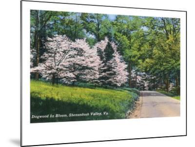 Shenandoah Valley, Virginia - View of Dogwood in Bloom, c.1956-Lantern Press-Mounted Art Print