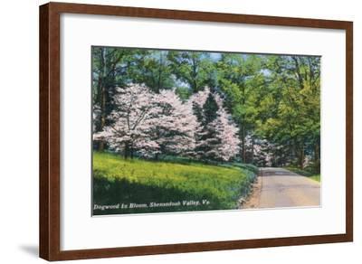 Shenandoah Valley, Virginia - View of Dogwood in Bloom, c.1956-Lantern Press-Framed Art Print