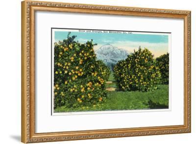 San Bernardino County, California - View of Snow-Capped Mountains and Orange Trees, c.1921-Lantern Press-Framed Art Print