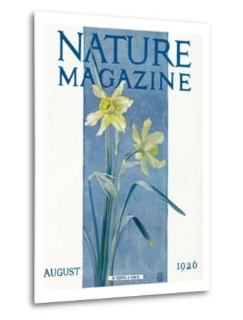 Nature Magazine - View of Blooming Daffodils, c.1926-Lantern Press-Metal Print