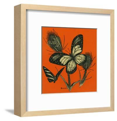 Nature Magazine - View of Butterflies on Thistles, c.1949-Lantern Press-Framed Art Print