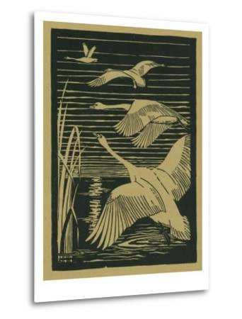 Nature Magazine - View of Swans Taking Flight, c.1938-Lantern Press-Metal Print