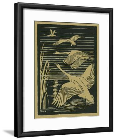 Nature Magazine - View of Swans Taking Flight, c.1938-Lantern Press-Framed Art Print