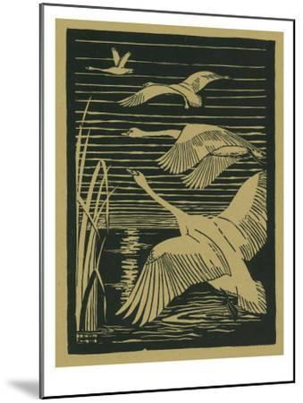 Nature Magazine - View of Swans Taking Flight, c.1938-Lantern Press-Mounted Art Print