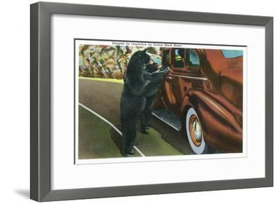 Great Smoky Mts. Nat'l Park, Tn - View of a Car Being Stopped by Native Black Bears, c.1940-Lantern Press-Framed Art Print