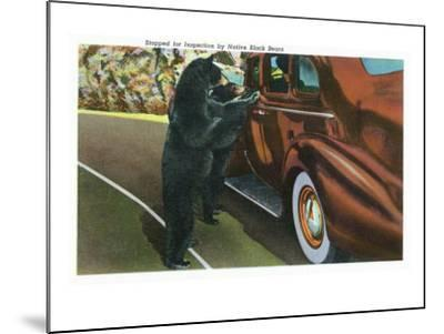 Great Smoky Mts. Nat'l Park, Tn - View of a Car Being Stopped by Native Black Bears, c.1940-Lantern Press-Mounted Art Print
