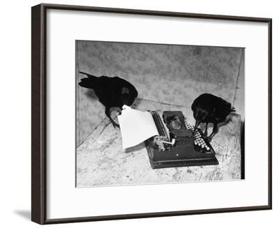 Raven Typing His Own Name of on the Typewriter-Peter Stackpole-Framed Photographic Print