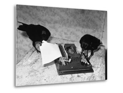 Raven Typing His Own Name of on the Typewriter-Peter Stackpole-Metal Print