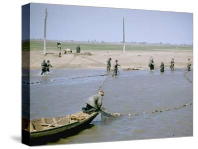 """Sweep Net Fishing for Sturgeon at """"Tanya"""" in Volga River Delta Nr. Astrakhan, Russia-Carl Mydans-Stretched Canvas Print"""