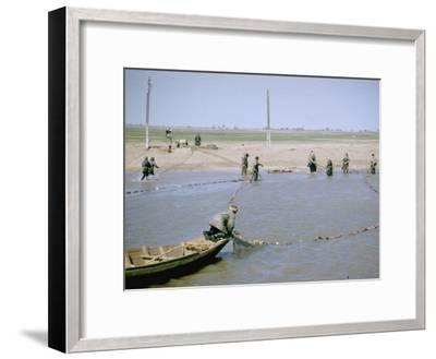 """Sweep Net Fishing for Sturgeon at """"Tanya"""" in Volga River Delta Nr. Astrakhan, Russia-Carl Mydans-Framed Photographic Print"""