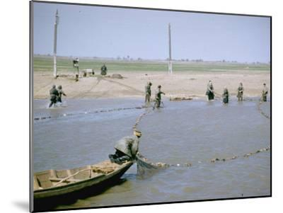 """Sweep Net Fishing for Sturgeon at """"Tanya"""" in Volga River Delta Nr. Astrakhan, Russia-Carl Mydans-Mounted Photographic Print"""