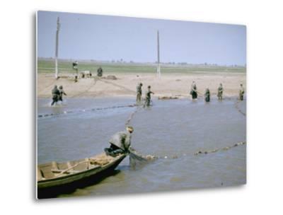 "Sweep Net Fishing for Sturgeon at ""Tanya"" in Volga River Delta Nr. Astrakhan, Russia-Carl Mydans-Metal Print"
