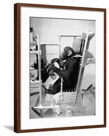 Training Chimpanzees at Hollowan Air Force Base for Trip into Space as Part of the Mercury Project-Ralph Crane-Framed Photographic Print