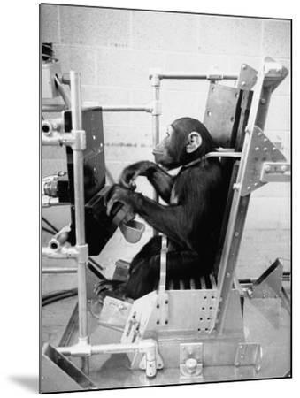 Training Chimpanzees at Hollowan Air Force Base for Trip into Space as Part of the Mercury Project-Ralph Crane-Mounted Photographic Print