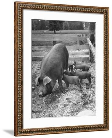 Mother Suckling Babies-Ed Clark-Framed Photographic Print