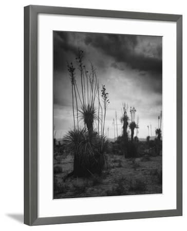 Yucca Plants in Desert-Alfred Eisenstaedt-Framed Photographic Print