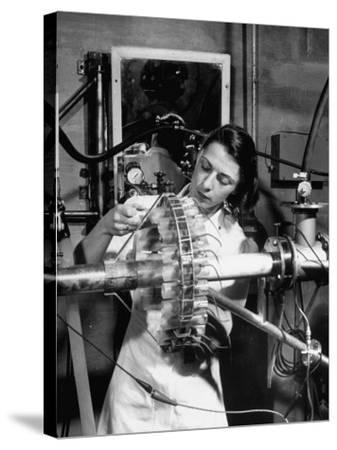Dr. Liane Russell Studying Effects of Radiation on Mouse Genetics at Oak Ridge National Laboratory--Stretched Canvas Print