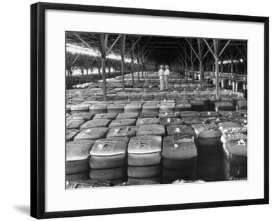 Archie Underwood and Another Man Standing on Top of Great Bales of Cotton in One of His Warehouses-Alfred Eisenstaedt-Framed Photographic Print