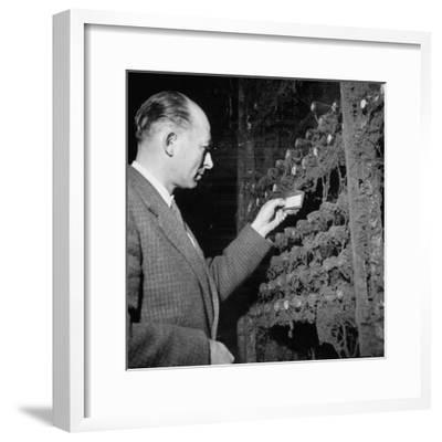 Director Yoes Kressmann, Looking at the Chateau Lafite Kept for His Own Personal Consumption--Framed Photographic Print