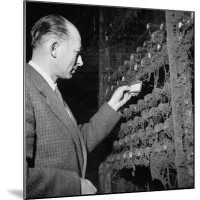 Director Yoes Kressmann, Looking at the Chateau Lafite Kept for His Own Personal Consumption--Mounted Photographic Print