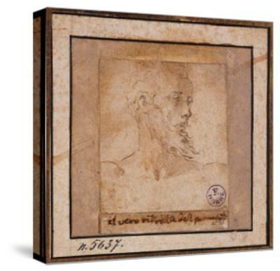 Study Sketch for a Bearded Male Head-Pieter Bruegel the Elder-Stretched Canvas Print