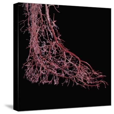 Resin Cast of Foot from Full Term Fetus-Ralph Hutchings-Stretched Canvas Print