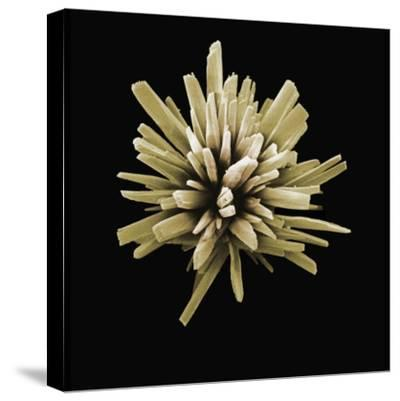 A Scanning Electron Micrograph of a Detergent Crystal Magnified X6000-David Phillips-Stretched Canvas Print