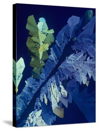 Tartaric Acid Crystals Viewed with Polarized Light-George Musil-Stretched Canvas Print