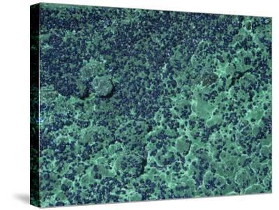 Azurite and Malachite, Bisbee, Arizona, USA-Ken Lucas-Stretched Canvas Print