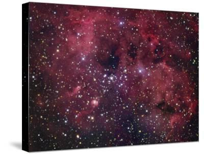 Ic410 Emission Nebula in Auriga-Robert Gendler-Stretched Canvas Print