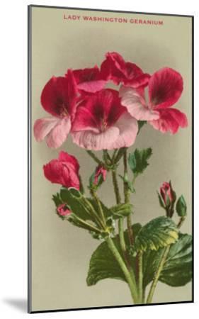 Lady Washington Geranium--Mounted Art Print
