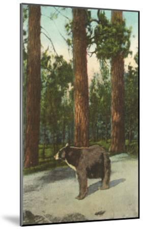 Bear, San Bernardino Mountains, California--Mounted Art Print