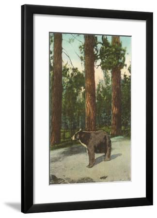Bear, San Bernardino Mountains, California--Framed Art Print