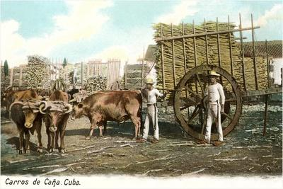 Sugar Cane Cart, Cuba--Stretched Canvas Print