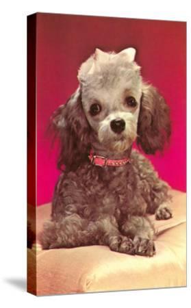 Poodle Pup--Stretched Canvas Print
