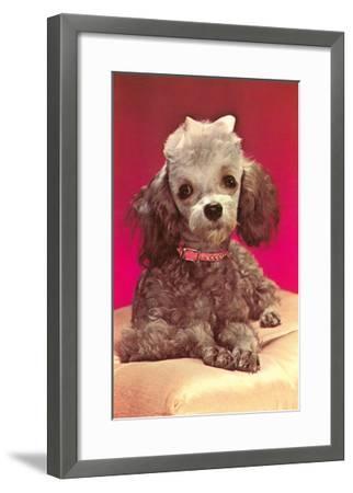 Poodle Pup--Framed Art Print