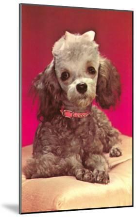 Poodle Pup--Mounted Art Print
