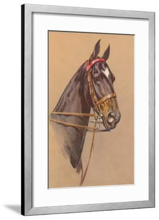 Black Horse with White Blaze--Framed Art Print