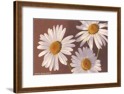 White Marguerite Daisies--Framed Art Print