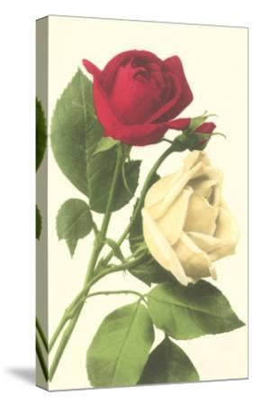 Red and White Roses--Stretched Canvas Print