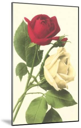 Red and White Roses--Mounted Art Print