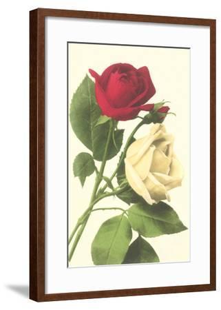 Red and White Roses--Framed Art Print