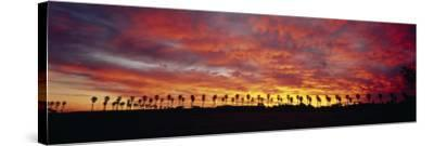 Silhouette of Palm Trees at Sunrise, San Diego, San Diego County, California, USA--Stretched Canvas Print