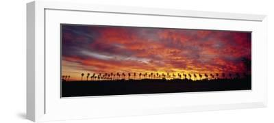 Silhouette of Palm Trees at Sunrise, San Diego, San Diego County, California, USA--Framed Photographic Print