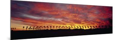 Silhouette of Palm Trees at Sunrise, San Diego, San Diego County, California, USA--Mounted Photographic Print