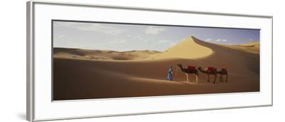Camels in Desert Morocco Africa--Framed Photographic Print
