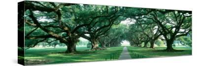 Louisiana, New Orleans, Brick Path Through Alley of Oak Trees--Stretched Canvas Print
