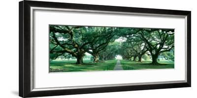 Louisiana, New Orleans, Brick Path Through Alley of Oak Trees--Framed Photographic Print